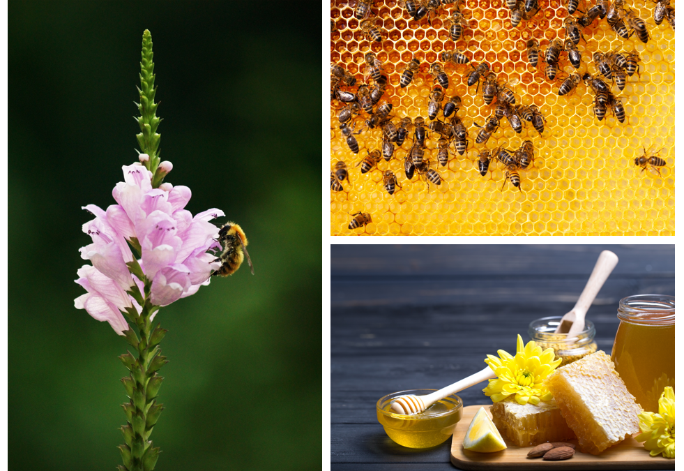 Bees influence in agriculture and the world